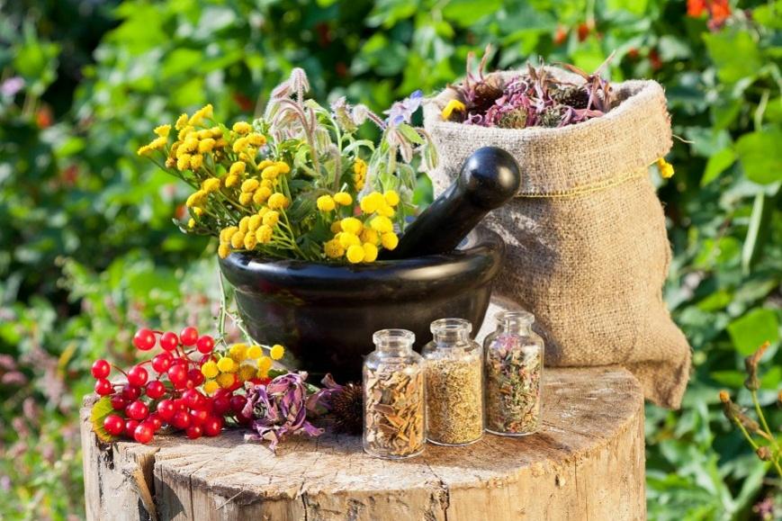 Лекарственные травы от геморроя