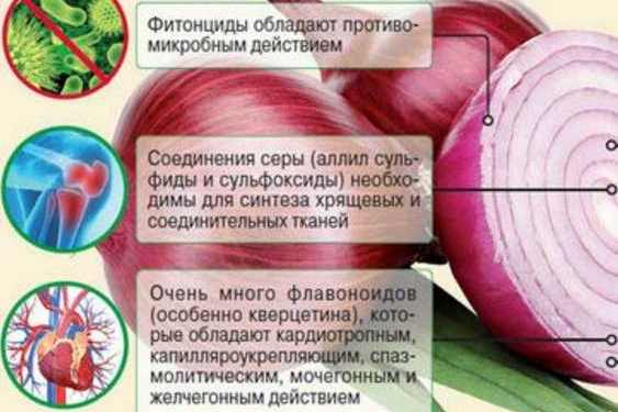 полезные свойства лук от геморроя