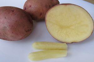 Геморроидальные свечи из сырого картофеля фото