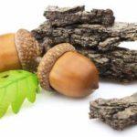 Кора дуба при геморрое: применение и рецепты