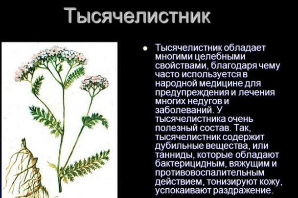 Польза растения